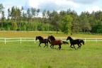 Sprzedam czynne ranczo 4,5 ha na wiele koni - 50 min autem od Gdańska