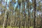 Las - dwie atrakcyjne działki leśne Juszki gm. Kościerzyna
