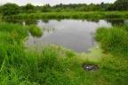 Działka 1 ha z dostępem do rzeki - 1 km od Białegostoku