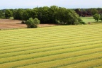 Kupię 20-30 ha gruntu w miastach lub okolicy: Olkusz, Mysłowice, Chrzanów
