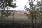 Gospodarstwo rolne 260ha Suwalszczyzna