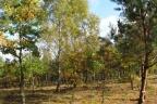Sprzedam działkę leśną rolną 7 ha z warunkami zabudowy