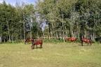 Ranczo dla 30 koni na 11 ha- koło Torunia, Wąbrzeźna