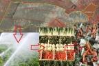 Sprzedamy kompleks rolno - przetwórczy warzyw
