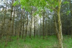 Sprzedam las oraz grunt rolny 9,13ha