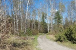 Działka leśna Wesoła