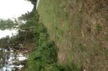Sprzedam działkę leśną 17500 m2