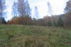 Działka w otoczeniu lasu