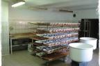 Sprzedam zakład produkcyjny - piekarnia (60 km od Wrocławia)