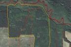 30 ha lasu w Borach Tucholskich
