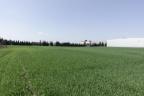 Robakowo / Gądki grunt pod produkcję, halę, park logistyczny blisko A2