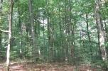 Drzewo bukowe (las z gruntem)