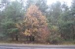 Działki leśne ze złożami żwiru