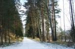 Kompleks obiektów w lesie