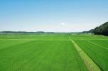 Kupię lub wydzierżawię grunty rolne