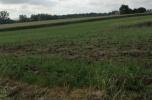 Poszukuje do dzierzawy lub kupna ziemi gruntu parceli ok 2ha pod farme fotowoltaiczna