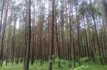 Sprzedam dwa lasy o pow. 2,7 ha powiat Węgrowski, gmina Korytnica