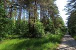 Sprzedam działkę leśną; 2,26 ha, woj. podlaskie
