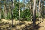 Sprzedam działkę leśną w trakcie przekwalifikow