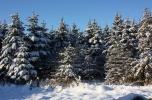 Sprzedam las z dopłatami 72 ha