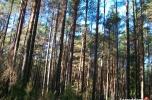 Sprzedam las z gruntem Łużany gmina Gródek