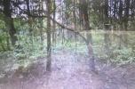Sprzedam lasy w Rakowie