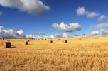 Wydzierżawię, wezmę grunty rolne w dzierżawę