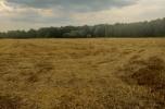 Ziemia na sprzedaż około 7 hektarów dobra cena warto