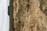 Żwirownia, kopalnia, wyrobisko - przy zjedzie na autostradę A2 Nowy Tomyśl - 10 ha